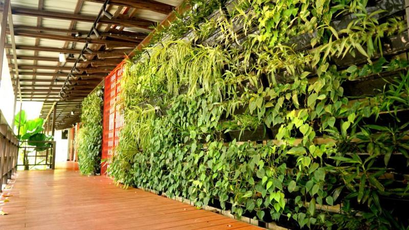 Savour Yakitori with Sake Amidst Green Walls at ToriYard